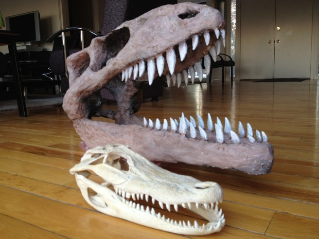 dinosaur skull & alligator skull