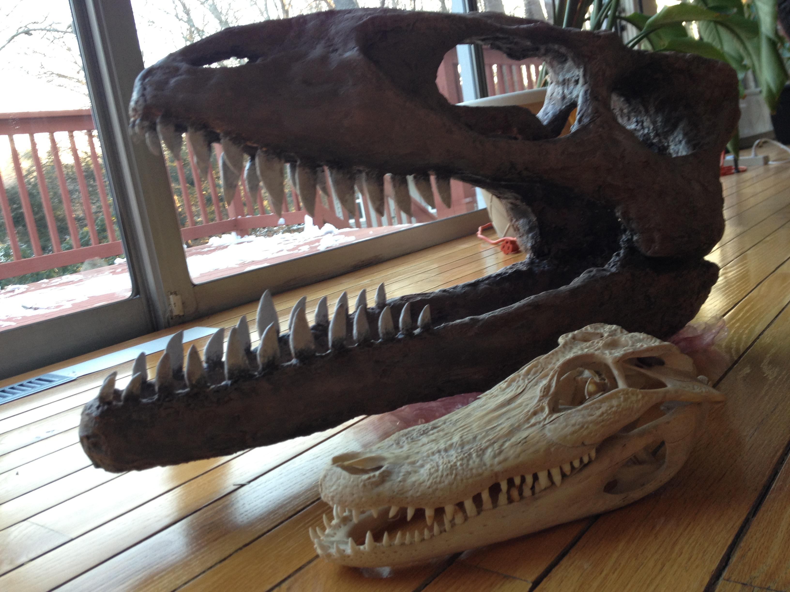 dinosaur excavation kit instructions