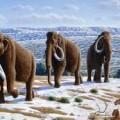 Wooly Mammoths Image credit: wikimedia