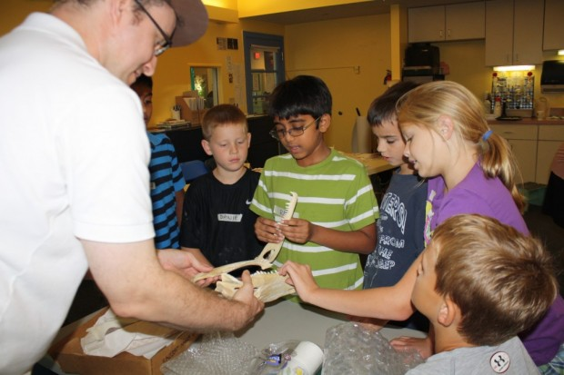 Fossil Activity Workshop