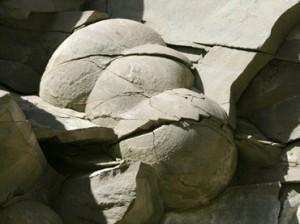 Indroda Dinosaur And Fossil Park Gujarat Egg Fossils Found