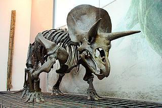 320px-Triceratops_Skeleton_Senckenberg