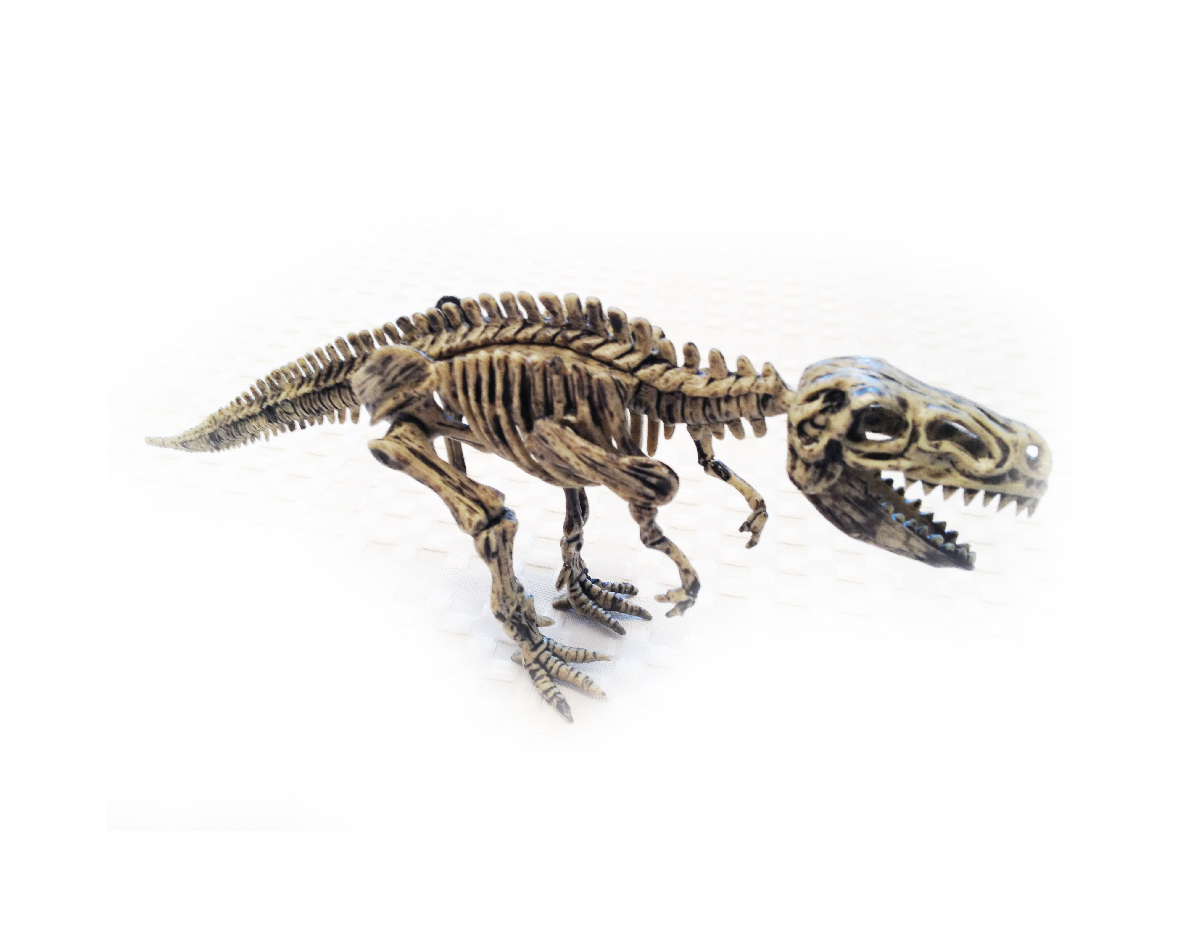 TYRANNOSAURUS / T-REX: Dinosaur Excavation Kit -- Dig out & build ...