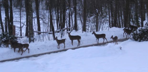 2008 01 04 Deer parade - Version 2