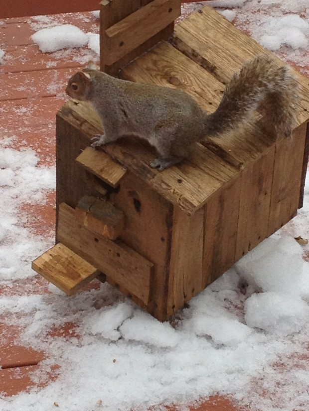 Squirrel Hotel - Open For Business