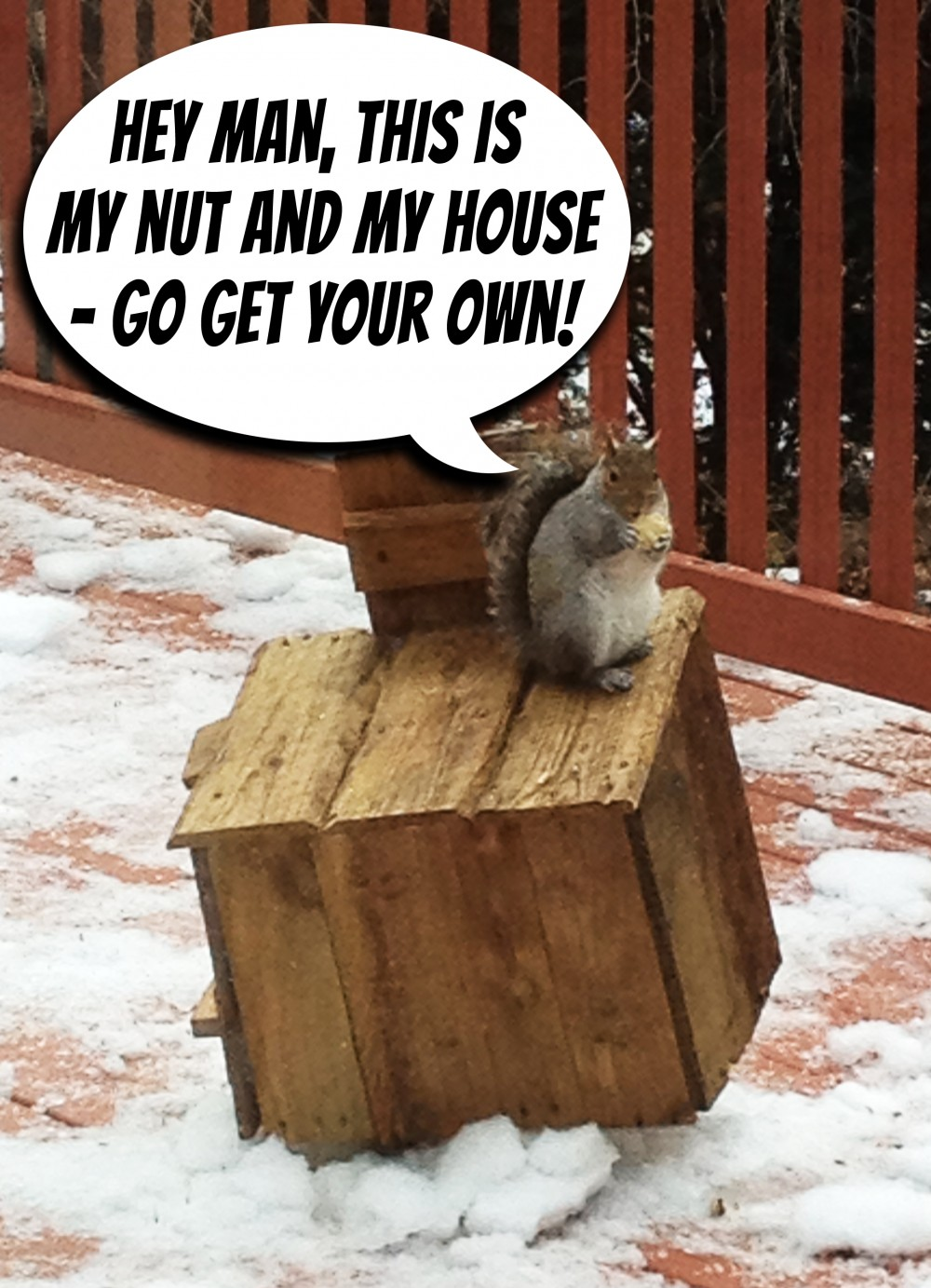 Biggest Animal On Earth >> Things to do with old pallets: The Rustic Squirrel Hotel | Tumblehome Learning - Science ...