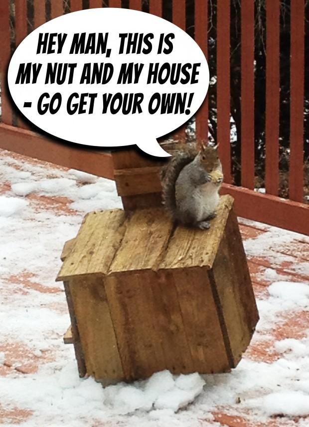 squirel hotel my nut funny