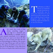 Page 20 Snow Leopard Book
