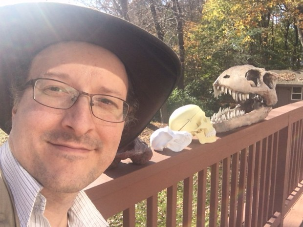 Barnas dino skull